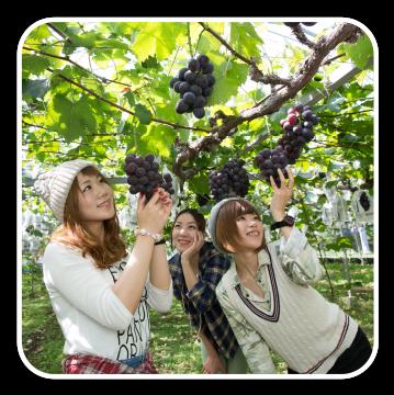 観光果樹園・農業収穫体験