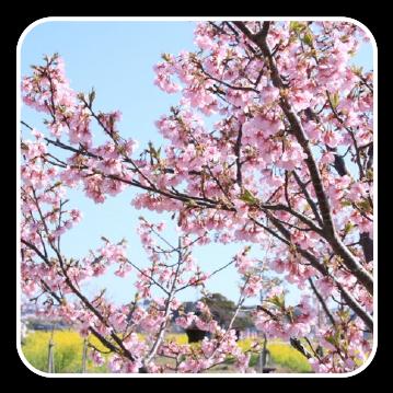 春 style