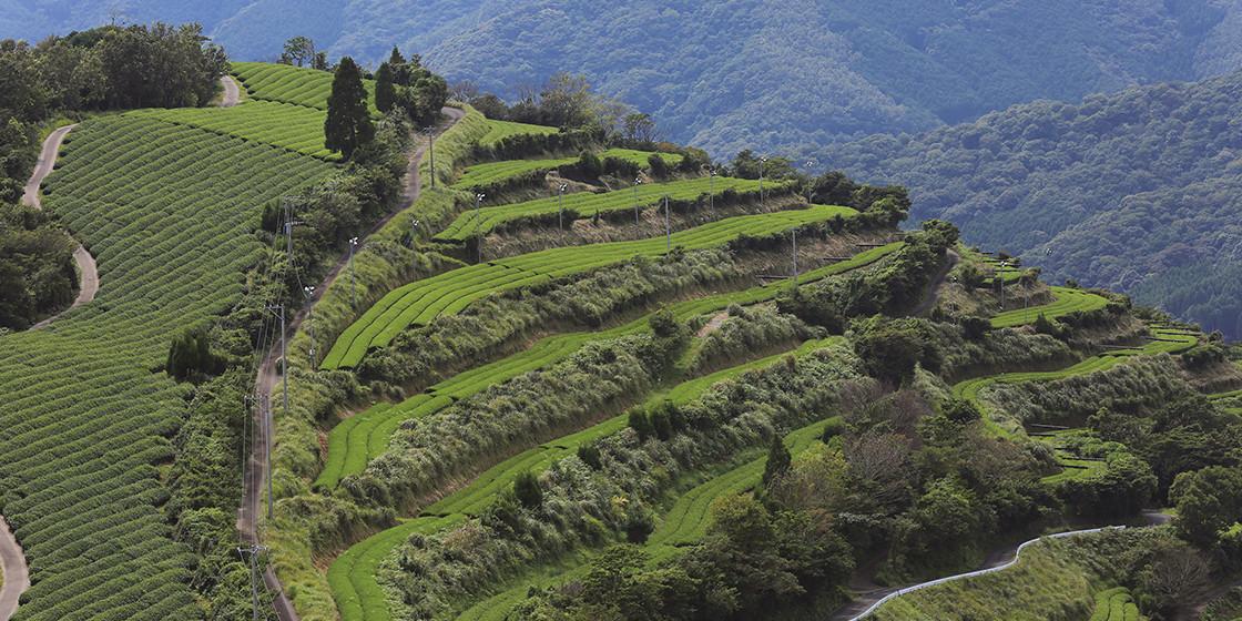 地毛の茶山